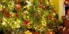 Živé vánoční stromky obi